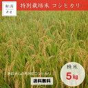【ふるさと納税】新潟 特別栽培米 コシヒカリ 「池田さんの見...