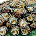 【ふるさと納税】小木の活サザエ 2.5kg 【魚貝類・サザエ...