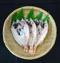 【ふるさと納税】のどぐろ一や干し 3枚×2回連続お届け 【魚...
