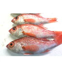 【ふるさと納税】高級魚「のどぐろ」2匹又は3匹セット