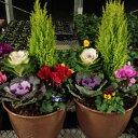 【ふるさと納税】冬の寄せ植えセット(8寸鉢植え・用土)