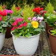 【ふるさと納税】冬の寄せ植えセット(8寸鉢植え1つ・用土)