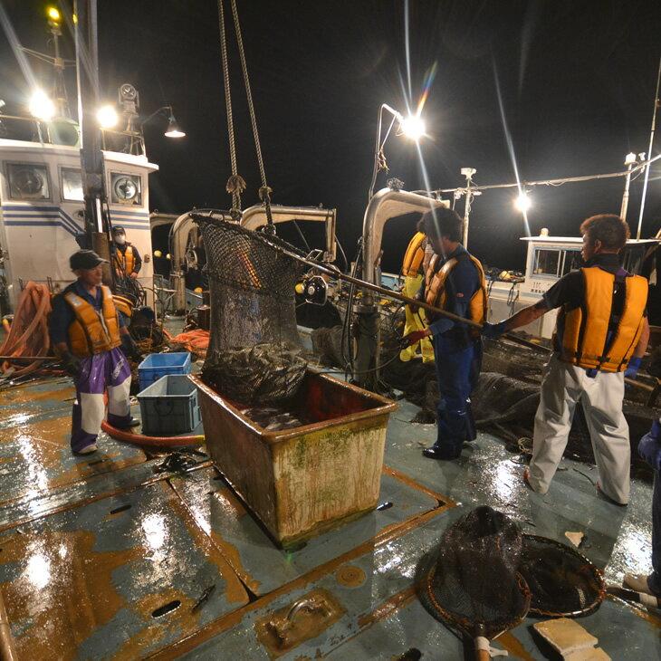 【ふるさと納税】大型定置網 漁師体験(漁師めし体験コース)
