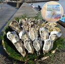 【ふるさと納税】能登穴水の牡蠣(ムキ身)