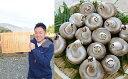 福井県坂井産ハナエチゼン令和元年産1等米25kg玄米