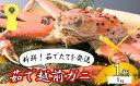 【ふるさと納税】越前ガニ茹で 冬の味覚の王者 1kg以上×1...