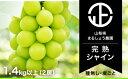 【ふるさと納税】シャインマスカット 産地直送 2房 1.4k...