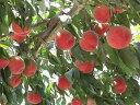 【ふるさと納税】フルーツ王国山梨の桃(3kg)※7月上旬〜8...