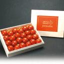 【ふるさと納税】【限定20箱】最高級 五つ星 至高のフルーツトマトpomodia桐調木箱1.2kg(24~35個)