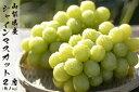 【ふるさと納税】【先行予約 限定300箱】日本一の葡萄の里・...