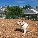 ご家族やお仲間でワイワイと過ごして頂くのがカゾラーレ流高原の休日です。 夏は涼しく、秋にはリンゴ狩り、冬は菅、カゾラーレのすぐ裏のゲレンデでスキー! ドッグランなどのワンコ用施設で愛犬とも楽しい時間をお過ごし頂けます。 また当ホテルオススメの檜風呂1時間貸し切り付き!日頃の疲れを癒して下さい。 ※お部屋の指定はできません。 ※檜風呂は予約状況により、ご希望の時間帯に承れない場合がございます。 名称CARO FORESTA 菅平 CASOLARE ペア宿泊券 内容CARO FORESTA 菅平CASOLARE 『スタンダードルーム』に泊まる ペア宿泊券(1泊2食付) ・本館スタンダード1泊2食 大人2名様 ・人気の貸切風呂1時間付き 備考◆注意事項 ・ご予約は、お電話、またはカゾラーレのサイトからお願い致します。 ・旅行会社・宿泊予約サイトでご予約された場合、この宿泊券はご利用できませんので、ご注意下さい。 ・こちらの宿泊プランは、(1)わんこご宿泊料金(2)宿泊条件に含まれないご飲食代は別途頂戴いたします。  現地でお支払いください。 ・ご宿泊日のご予約は、満室の場合、ご希望に沿えない場合がございますので、予めご了承ください。 ・休前日も利用可能ですが、満室日、対象除外日のご利用はできません。 ・キャンセルの場合は、15日前までにお知らせください。 ・当日ご到着が17:00を過ぎる場合はご連絡をお願いいたします。 ・追加の大人・お子様料金につきましてはお問い合わせ下さい。 ※下記の日はご利用頂けませんのでご注意下さい。 ・年末年始、GW、夏期繁忙期 提供元株式会社アットエフ 申込可能な期間通年可能 発送可能な時期通年可能 ・ふるさと納税よくある質問はこちら ・寄付申込みのキャンセル、返礼品、変更・返品はできません。あらかじめご了承ください。100-021ペットと泊まる CARO FORESTA 菅平 CASOLARE ペア宿泊券 入金確認後、注文、容確認画面の【注文者情報】に記載の住所に60日以内に発送いたします。 ワンストップ特例申請書は入金確認後60日以内に、お礼、特産品とは別に住民票住所へお送り致します。