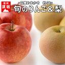 【ふるさと納税】【信州須坂のフルーツ】旬のリンゴ&旬の梨 約5kg 【果物・フルーツ・果物・フルーツ...