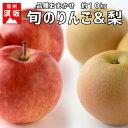 【ふるさと納税】【信州須坂のフルーツ】旬のリンゴ&旬の梨 約...