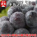 【ふるさと納税】ナガノパープル 約1〜2房 (約1kg)《信州グルメ市場》■2021年発送■※9月頃より順次発送予定 果物 ぶどう フルーツ