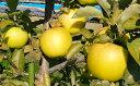 【ふるさと納税】福井りんご園のシナノゴールド 約5kg 【果...