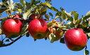 【ふるさと納税】福井りんご園のシナノスイート 約5kg 【果...