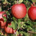 【ふるさと納税】西の峰果樹園の蜜入りリンゴ(サンふじ)約5k...