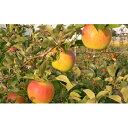 【ふるさと納税】福井りんご園の名月 秀約5kg 【果物・フル...
