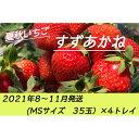 【ふるさと納税】夏秋いちご すずあかね(MS35玉)×4トレイ<2021年8~11月発送>