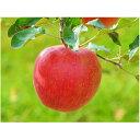 【ふるさと納税】信州りんごシナノスイート約5kg 【果物・フルーツ・くだもの・リンゴ・林檎】 お届け...