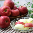 【ふるさと納税】りんごのトップバッターつがる! 長野県産 りんご(つがる) 約3kg 秀品※8月中旬〜9月中旬順次発送予定※着日指定はできません。沖縄・離島への発送不可。