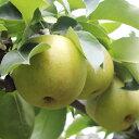 【ふるさと納税】溢れる果汁 長野県産 なし(二十世紀) 約5...