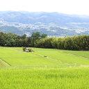 【ふるさと納税】長野県オリジナル米 風さやか 10kg(精米)2017年度産  ※着日指定はできません。沖縄・離島への発送不可。