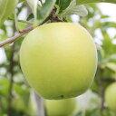 【ふるさと納税】黄金色に輝く りんご(シナノゴールド) 約5...