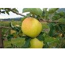 【ふるさと納税】【2021年度産】安曇野のぐんま名月 約5kg 【果物・フルーツ・果物類・林檎・りん