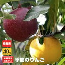 【ふるさと納税】新規就農者応援コース 季節のりんご(贈答用)約10kg