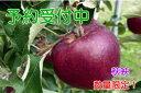 【ふるさと納税】【予約販売】秋映りんご 特秀5kg(サイズお...