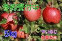【ふるさと納税】【予約販売】 飯綱のりんご サンふじ 約5k...