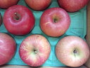 【ふるさと納税】 松澤農園 の りんご 【 サンふじ 】 訳あり 10kg 長野県 飯綱町 飯綱町産