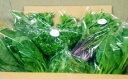 【ふるさと納税】M10S14 水耕栽培の葉物野菜
