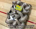 【ふるさと納税】No.228 【美濃やまっこ】生シイタケ 1.2kg / きのこ キノコ 生しいたけ 生椎茸