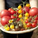 【ふるさと納税】《夏季限定》雪解け水で育ったカラフルな濃厚トマト2kgセット(大玉・ミニトマト)[A0018]