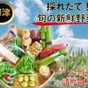 【ふるさと納税】採れたて!旬の新鮮野菜 詰め合わせ 【野菜・...