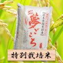 【ふるさと納税】特別栽培米 夢ごこち 精米10kg(分搗き可...