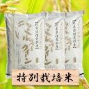 【ふるさと納税】特別栽培米 ミルキークイーン 精米30kg(...
