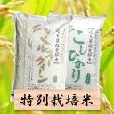 【ふるさと納税】特別栽培米 20Kg ミルキークイーン/コシ...