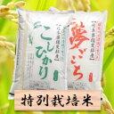 【ふるさと納税】特別栽培米 20kg コシヒカリ/夢ごこち2...