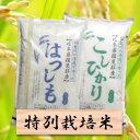 【ふるさと納税】特別栽培米 20kg コシヒカリ/ハツシモ2...
