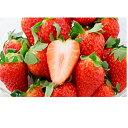 【ふるさと納税】【2022年1月下旬より順次発送】キラっと輝くいちご『きらぴ香』2箱4パック 【果物類・いちご・苺・イチゴ・2箱】 お届け:2022年1月下旬~4月中旬