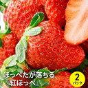 【ふるさと納税】【2022年3月上旬より順次発送】ほっぺたが落ちる『紅ほっぺ』 2パック 【果物類・イチゴ】 お届け:2022年3月上旬~4月末