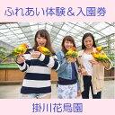 【ふるさと納税】掛川花鳥園 ふれあい体験&入園券