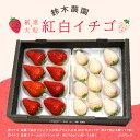 【ふるさと納税】掛川産「厳選大粒 赤と白イチゴ」 270g×