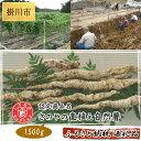 【ふるさと納税】さのやの直植え自然薯(1500g)
