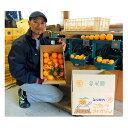 ショッピングコタツ 【ふるさと納税】こたつみかん10kg(サイズいろいろ・ご家庭用) 【果物類・柑橘類・みかん・フルーツ】 お届け:2019年11月25日〜12月25日