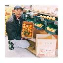 ショッピングこたつ 【ふるさと納税】こたつみかん はるみ5kg(サイズいろいろ詰め合わせ) 【果物類・柑橘類・みかん・フルーツ】 お届け:2020年1月25日〜2月25日
