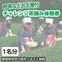 【ふるさと納税】005-020 チャレンジ茶摘み体験券(1名様用)